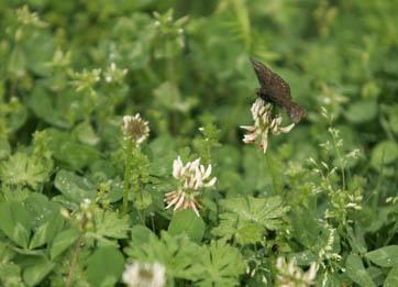 2007-04-02-butterfly2.jpg