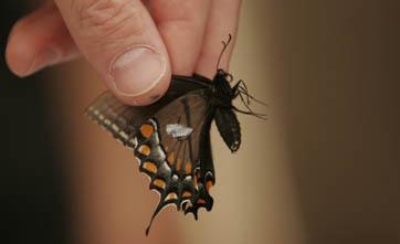 2007-04-02-butterfly4.JPG