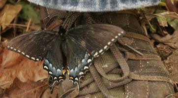 2007-04-02-butterfly9.JPG
