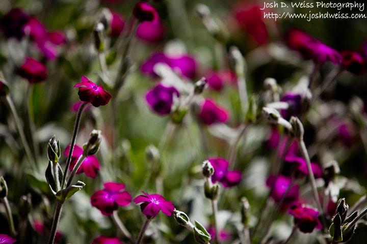 090510_jdw_botanicalgardens_0001