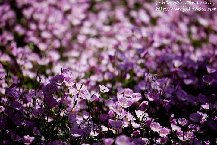 090510_jdw_botanicalgardens_0002