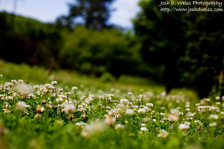 090510_jdw_botanicalgardens_0004
