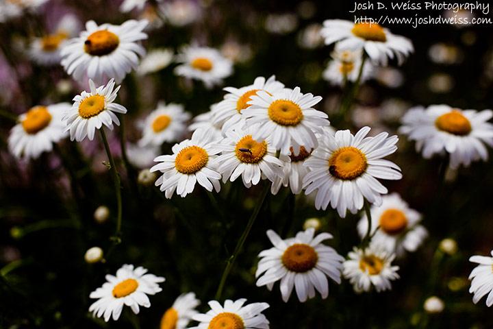 090510_jdw_botanicalgardens_0007