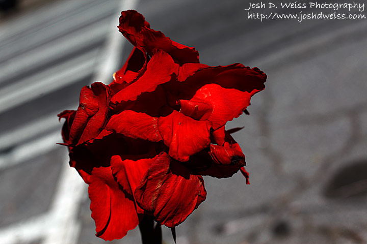 090718_JDW_WRFG_0002