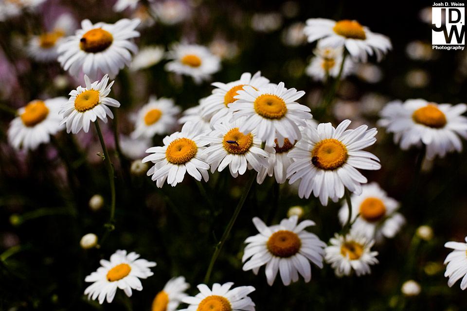 091218_JDW_BotanicalGardens_0007
