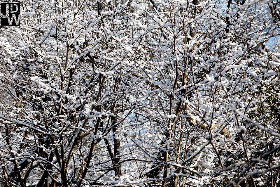 100213_JDW_Snow_0041