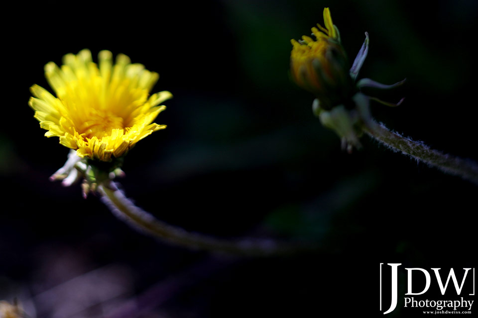 100619_JDW_Breckenridge_0010