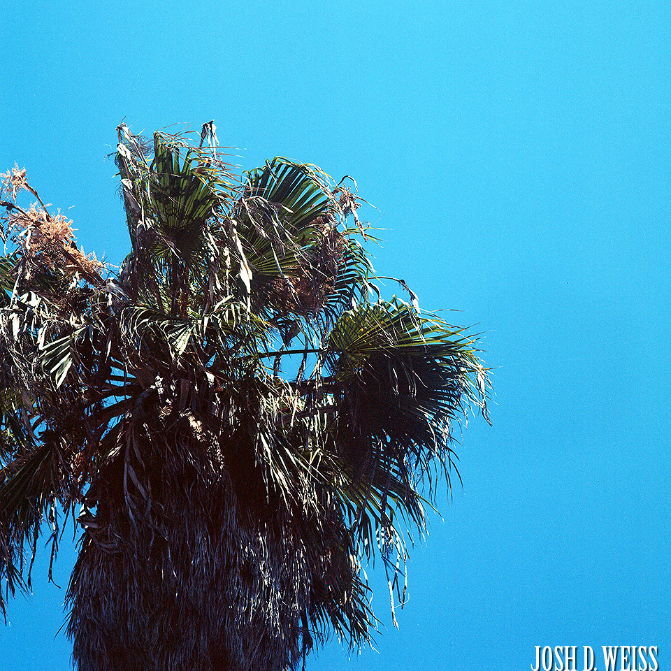 150814_JDW_Venice-Film_0008